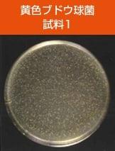 antibacterial02