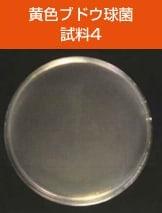 antibacterial03