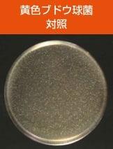 antibacterial04